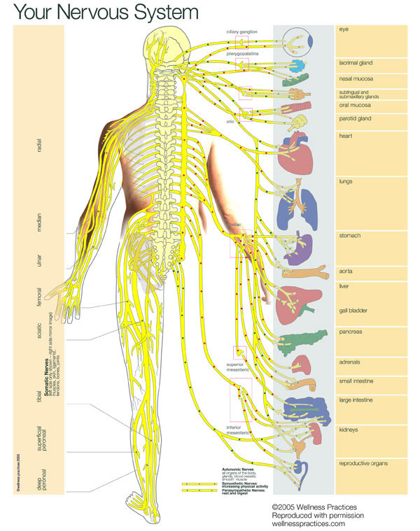 Your Nervous System - Simply Chiropractic