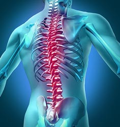 Your Chiropractor in Wollongong